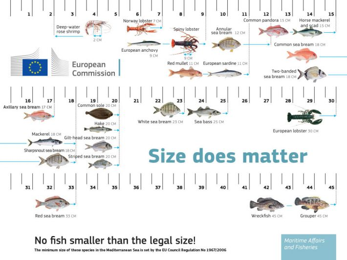 yök sustainable fish size ruler
